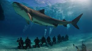 Scuba Diving with Sharks | Project AWARE Finathon with Instructor Development Philippines